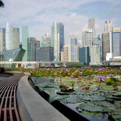 Imagem da notícia: Reserve já o seu espaço para a IDEM Singapore 2020