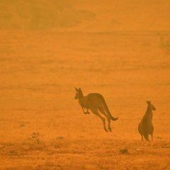 Imagem da notícia: Henry Schein Cares Foundation solidária com a Austrália